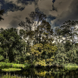 CAJUN SWAMP by Ron Olivier - Digital Art Places ( cajun swamp )