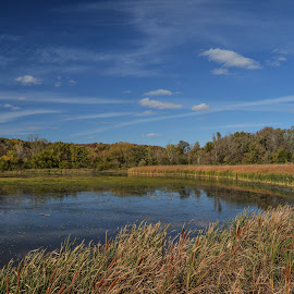 Early Fall by Robert Coffey - Landscapes Waterscapes ( clouds, water, autumn, fall, trees, lake, reeds )