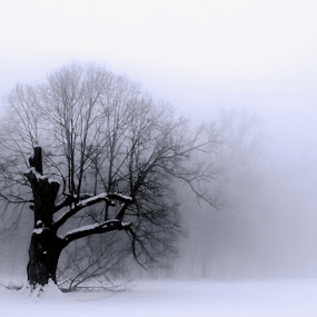 by Jasenka LV - Backgrounds Nature ( , Tree, Nature, Sky, garyfonglandscapes, holiday photo contest, photocontest )
