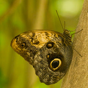 Butterfly by Malcolm Duke - Animals Insects & Spiders ( butterfly, butterflyfarm, bright, natal, pmb,  )