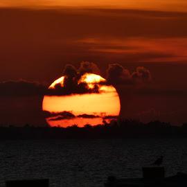 Circle of life by Judy Boyle - Landscapes Sunsets & Sunrises (  )