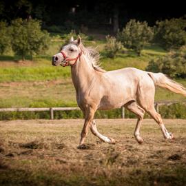 Get off your high Horse by Myra Brizendine Wilson - Animals Horses ( rescue horses, carolina equine rescue & assistance, equine, horses, horses running, nc, cera, equine rescue, horse )