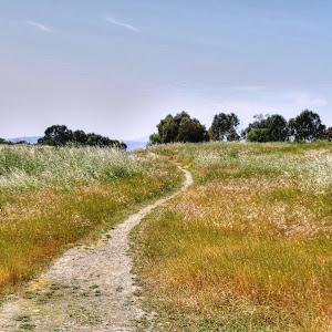 Marsh Road Preserve 037_a_b_tonemapped.jpg