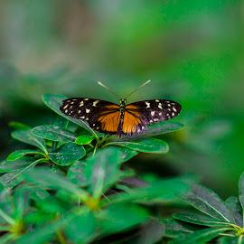 Butterfly in the forest by Péter Dudás - Animals Other ( állatkert, buttrerfly, zoo, forest, nyár, pillangó )