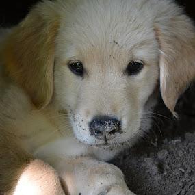 Dirt bath by Isabelle Largen - Animals - Dogs Portraits