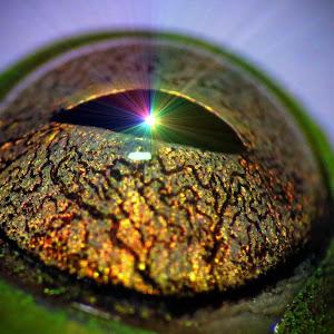frog eye3.jpg