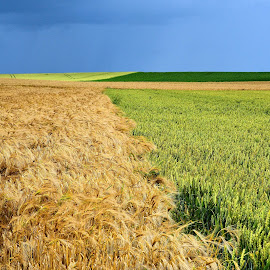Patchwork by Heather Aplin - Landscapes Prairies, Meadows & Fields