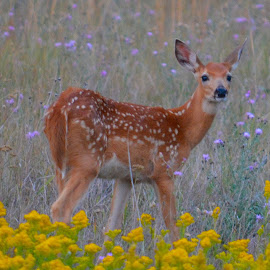 Spotted Beauty by Lyn Daniels - Animals Other