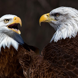by Dennis Bartsch - Animals Birds