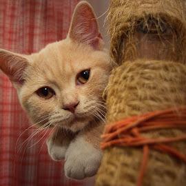 My name is Brumelo by Jiri Cetkovsky - Animals - Cats Kittens ( rest, cat, aniomal, brumelo, kitty )