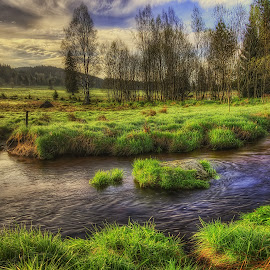 in peat bog by Petr Klingr - Landscapes Prairies, Meadows & Fields ( clouds, hdr, grass, trees, river )