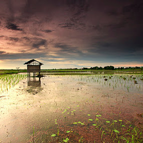 sawah by Rachmat Sandiko - Landscapes Prairies, Meadows & Fields
