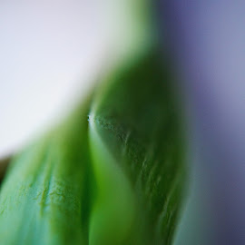 Floral studies by Bethany Fuller - Abstract Macro ( abstract, detail, floral photography, macro photography, green leaf )