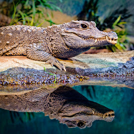 by Judy Rosanno - Animals Reptiles