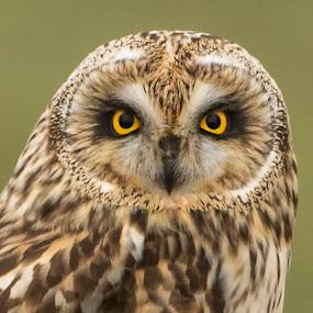 by Peter Murphy - Animals Birds (  )