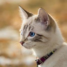 SAM's Enviromental Profile Portrait by Julie Wooden - Animals - Cats Portraits ( cat, kitten, north dakota, winter, hebron, outdoors, profile portrait, feline, portrait, sam, enviromental portrait, animal )