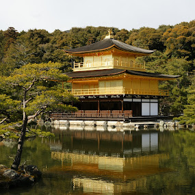 Gold by Dan Herman - Buildings & Architecture Other Exteriors ( reflection, japan, kyoto, golden pavilion )