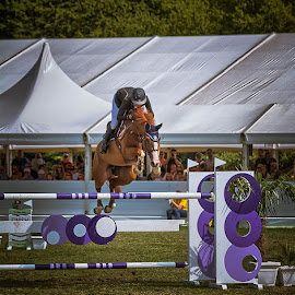 by Dragan Rakocevic - Sports & Fitness Other Sports ( jumping, green, horse, sport, summertime, competition )