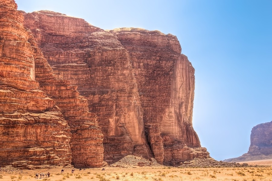 Wadi Rum by Peter Kennett - Travel Locations Landmarks ( desert, jordan, camels, wadi rum )