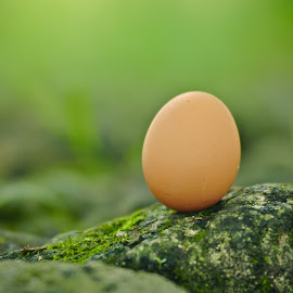 Telur di Tepi Batu by Agus Mahmuda - Nature Up Close Other Natural Objects ( chicken, grass, green, one, best, stone, egg, alone, garden )