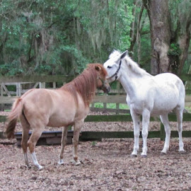 Sharing their secrets. by Terry Linton - Animals Horses