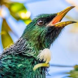 Im Calling by Ken Nicol - Animals Birds (  )