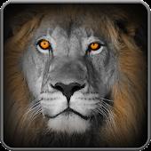 Game hunt lion: save prey apk for kindle fire