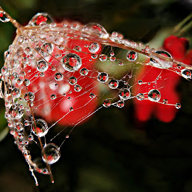 Lovely Impressions by Marija Jilek - Nature Up Close Natural Waterdrops