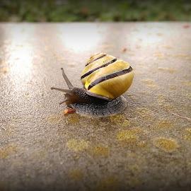 A snail..... :-) by Ana Wisniewska - Animals Other