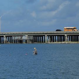 Gone Fishin' by Don Bates - People Street & Candids ( bay, blue, se texas, summer, fishing )