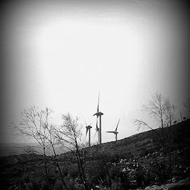 Windkrafträder in Portugal by Marianne Fischer - Black & White Landscapes ( windkrafträder, portugal )