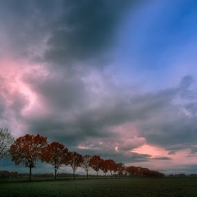 Row of trees by Rob Menting - Landscapes Weather ( clouds, water, sky, tree, blue, green, weert, limburg, trees, landscape, netherlands )