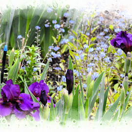 How Sweet it is. by Leslie Hunziker - Instagram & Mobile iPhone ( yard, flowers, spring, garden )