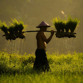 Off to work by Deny Satria - People Street & Candids ( #farmer #paddyfield #village #traditional #westjava #indonesia )