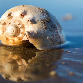 Empty shell on the beach by Clarissa Human - Nature Up Close Other Natural Objects ( beaches, beach combing, shell, shells, reflections,  )