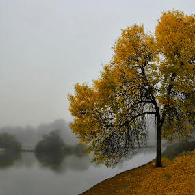 OTOÑO by Miguel Lopez De Haro - Nature Up Close Trees & Bushes ( arboles, lagos, naturaleza )