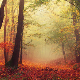 Colorful October by Zsolt Zsigmond - Landscapes Forests ( scenics, forest, yellow, leaf, landscape, sunlight, orange color, nature, tree, season, autumn, fog, outdoors, branch, woodland, sunbeam )