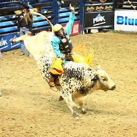 Winning Done Right by Brian  Shoemaker  - Sports & Fitness Rodeo/Bull Riding ( cowboy, rider, bullrider, rodeo, bull )