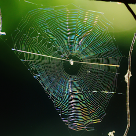 nature: Spider architecture by Marcello Toldi - Nature Up Close Webs