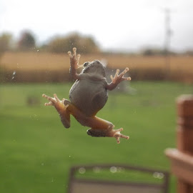 by Marsha Fairfield - Animals Amphibians