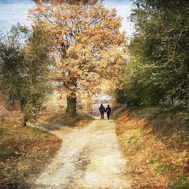 a passeggio by Mario Tonolini - Digital Art Places ( passeggiata, bosco )