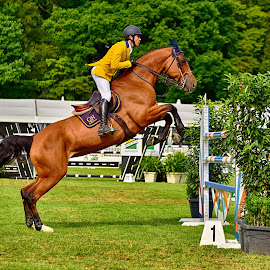 by Marco Bertamé - Sports & Fitness Other Sports ( jumping, green, horse, brown, yellow, jump,  )