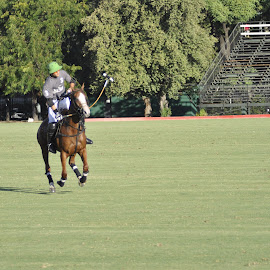 Polo en Argentina by Armando Marcelo Benitez - Sports & Fitness Other Sports