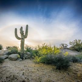 Desert Cactus Halo by Ralph Resch - Landscapes Prairies, Meadows & Fields ( desert, cactus,  )