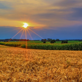 Golden Wheat Sunset by Monica Hall - Landscapes Prairies, Meadows & Fields (  )