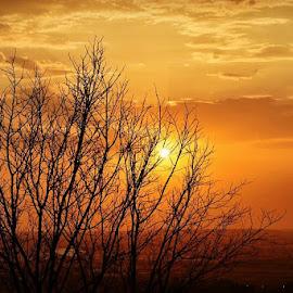 beautiful bhopal by Rajeshwar Meena - Nature Up Close Trees & Bushes