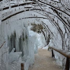 Ledeni objem by Bojan Kolman - Nature Up Close Trees & Bushes (  )