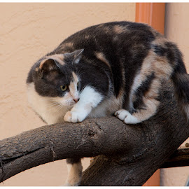 by Linda McBride - Animals - Cats Portraits