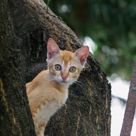 Kittens by Afik Razanafi - Animals - Cats Kittens ( color, d3100, colored, kittens, nikon, eye )