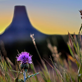 Flowers and the Tower by Shauna Rae - Landscapes Prairies, Meadows & Fields ( wildflower, wyoming, devil's tower, prairie, flower )